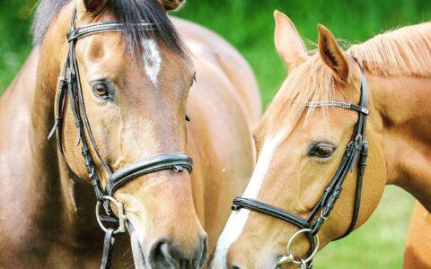 Hästunderstödd terapi